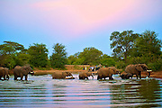 Elephant herd crosses a dam as tourists look on bathed in the pastel blues and pinks of dusk. Klaserie, South Africa