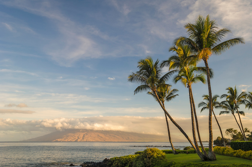 Coconut palm trees and west Maui mountains in early morning light from Wailea; Maui, Hawaii.