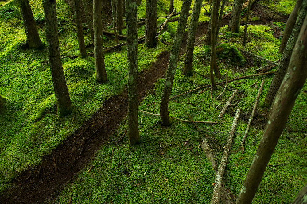 Mountain Bike Single-track slicing through the forest floor