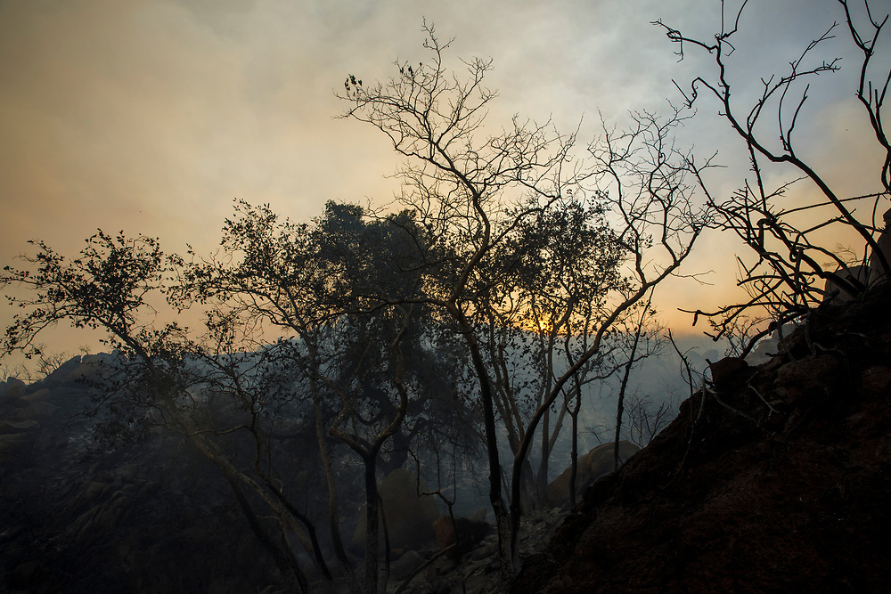 Charred trees stand after the Wildomar wildfire jumped a road in the Cleveland National Forest on Thursday, October 26, 2017 in Wildomar, Calif. The fire started after a motorcycle crashed into a tree. © 2017 Patrick T Fallon
