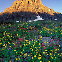Mount Clements and wildflowers. Glacier National Park, Montana.