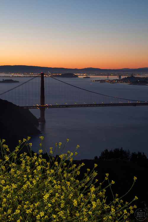 """""""Golden Gate Bridge Sunrise 6"""" - Photograph of yellow flowers with San Francisco's famous Golden Gate Bridge at sunrise in the background."""