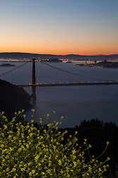 """Golden Gate Bridge Sunrise 6"" - Photograph of yellow flowers with San Francisco's famous Golden Gate Bridge at sunrise in the background."