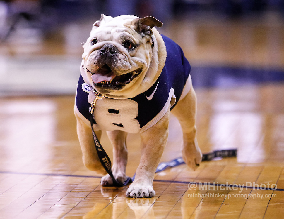 INDIANAPOLIS, IN - JANUARY 19: Blue II the mascot for the Butler Bulldogs is seen before the game against the Gonzaga Bulldogs at Hinkle Fieldhouse on January 19, 2013 in Indianapolis, Indiana. Butler defeated Gonzaga 64-63. (Photo by Michael Hickey/Getty Images) *** Local Caption *** Blue II