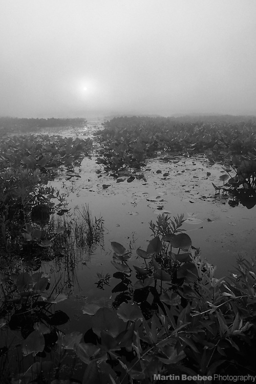 Sunrise through the mist, Pymatuning Swamp, Pennsylvania
