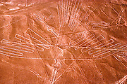 PERU, NAZCA CULTURE Nazca lines, 200AD-800AD; huge drawings in the desert on the south coast of Peru; aerial view of a giant hummingbird