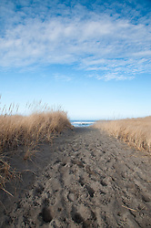 Path Through Dunes to Beach at Loomis Lake State Park, Long Beach, Washington, US