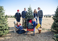 Choosing your family christmas tree in Longmont