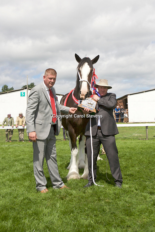Martin Fountain's Brown Mare<br /> Woodhouse Calendar Girl with foal by Methringham Upton Hamlet<br /> Sire  Moorfield Ted<br /> 1st Brood Mare<br /> Best Mare or Filly<br /> Champion Shire<br /> Winner of the Shire HOYS Qualifying Class