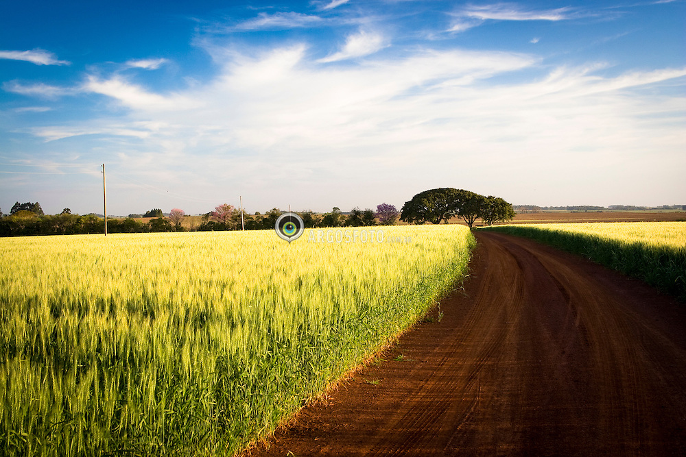 Lavoura de trigo no periodo de floracao estrada rural / Wheat field and farm road - Sao Borja - RS -Brazil 2008