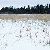 Bog in winter, Riding Mountain National Park, Manitoba, Canada