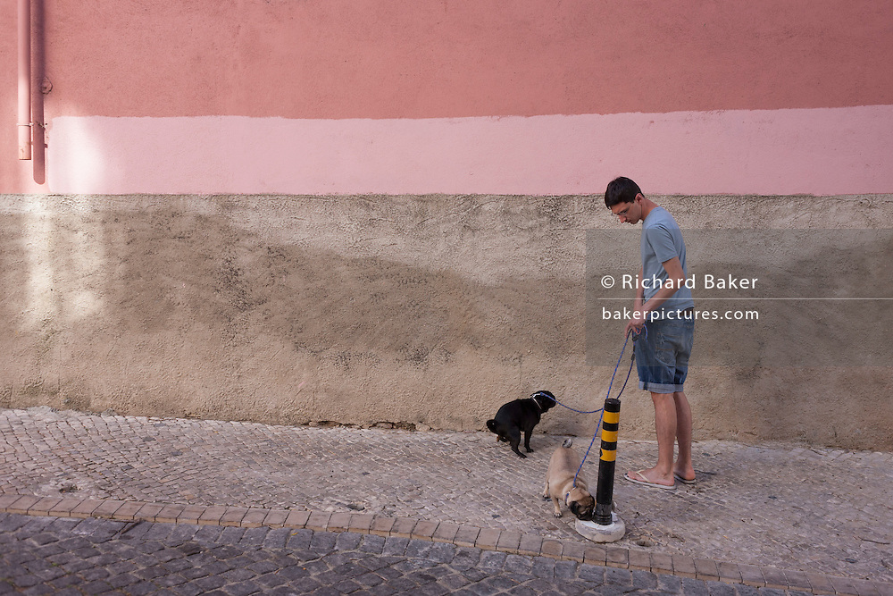 A local pet owner stops to allow one of his Pug dogs to defecate on the pavement of a quiet residential street, on 11th July 2016, in Lisbon Portugal. Under a pink coloured wall and near the Castelo Sao Jorge, the man has both pets on leads and allows the other to sniff a low post. (Photo by Richard Baker / In Pictures via Getty Images)