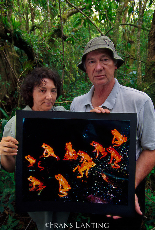 Michael and Patricia Fogden with print of extinct golden toad, Bufo periglenes, Monteverde Cloud Forest Preserve, Costa Rica