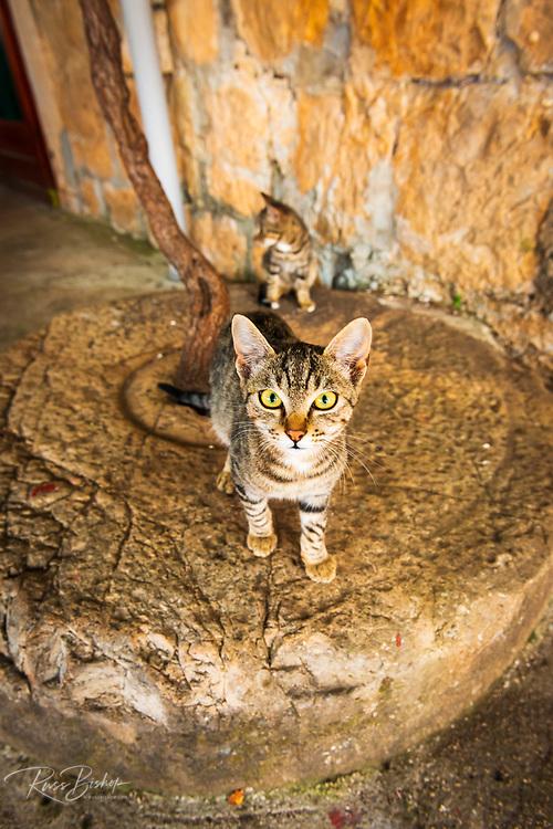 Farm cats on an olive press wheel, Sudurad, Sipan Island, Dalmatian Coast, Croatia