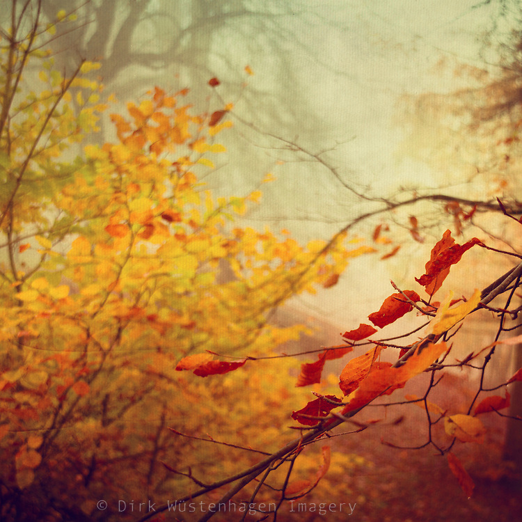 Colorful autumn leaves in a misty landscape - texturized photograph<br />