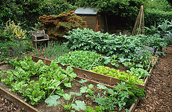 Small vegetable garden with wooden raised beds. Bark paths
