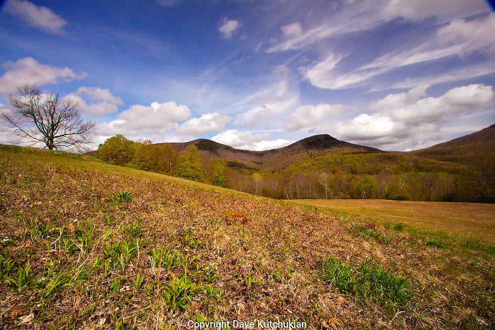 rugged land in dorset hollow,vt,shed off winters dead skin to allow the greens of spring to rise.