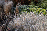 Frost coated grasses on a February morning in the garden at Chiswick House, Chiswick, London, UK
