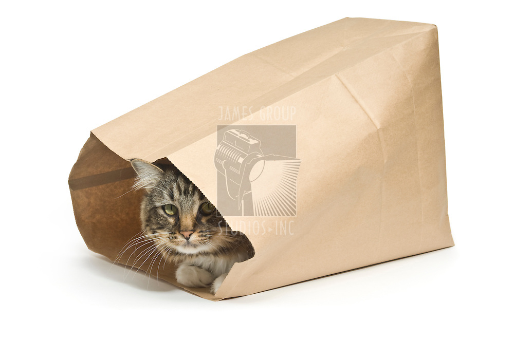 """Tabby cat inside a paper bag illustrating a guarded secret from the saying """"the cat's in the bag"""""""