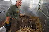 Joep van de Vlasakker, Wildlife Advisor to Rewilding Europe and the main organiser of the bison transportation. Transportation of European Bison, or Wisent, from the Avesta Visentpark, in Avesta, Sweden. The animals were then transported to the Armenis area in the Southern Carpathians, Romania. All arranged by Rewilding Europe and WWF Romania, with financial support from The Dutch Postcode Lottery, the  Swedish Postcode Foundation and the Liberty Wildlife Fund.