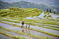 April 18, 2018 - Congjiang, China - Farmers transplant rice seedlings at terraced fields in Congjiang, southwest China's Guizhou Province. (Credit Image: © SIPA Asia via ZUMA Wire)