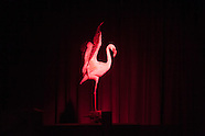 club flamenco