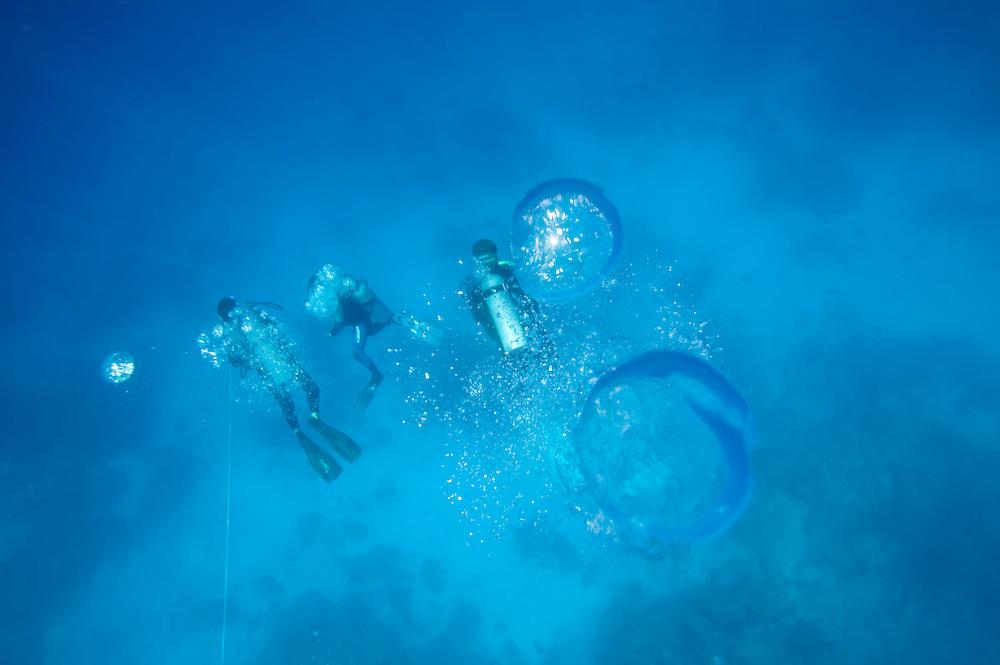 Africa, Tanzania, Zanzibar, Matemwe Bay, Air bubbles rise from scuba divers approaching surface in Indian Ocean
