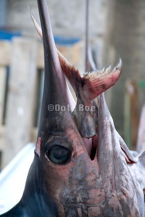 a strange display with a sword fish head at a fish market