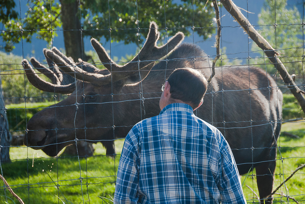 The Wildlife Conservation Center near Portage Glacier provides a close up view of bear, moose, musk oxen, caribou, etc.in their natural habitat outdoors.  A must see. Great for kids and adults.