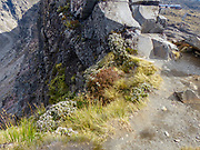 Tongariro National Park landscape Ski resort in summer, New Zealand, North Island.