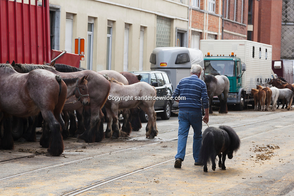Belgian horses stand in line, attached to a truck. Every year honouring Saint Guido, protector of animals, the people of Anderlecht, suburb of Brussels, organize a fair with this horse market.A farmer with a tiny pony passes by.
