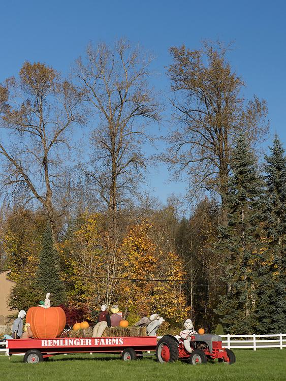 United States, Wasshiington, Carnation, Remlinger Farms at Halloween
