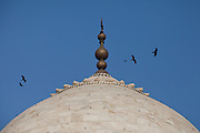 Birls are flying across the main dome of the Taj Mahal, in Agra.