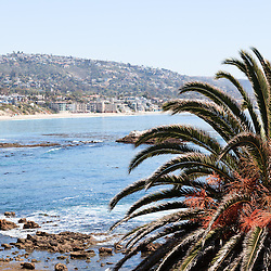 Photo of Laguna Beach California palm tree, Pacific Ocean, and seaside buildings and houses. Laguna Beach is a beach town in Orange County Southern California.