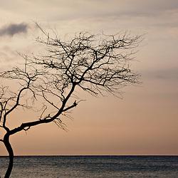 The Big Island, Kohala Coast, Hawaii.