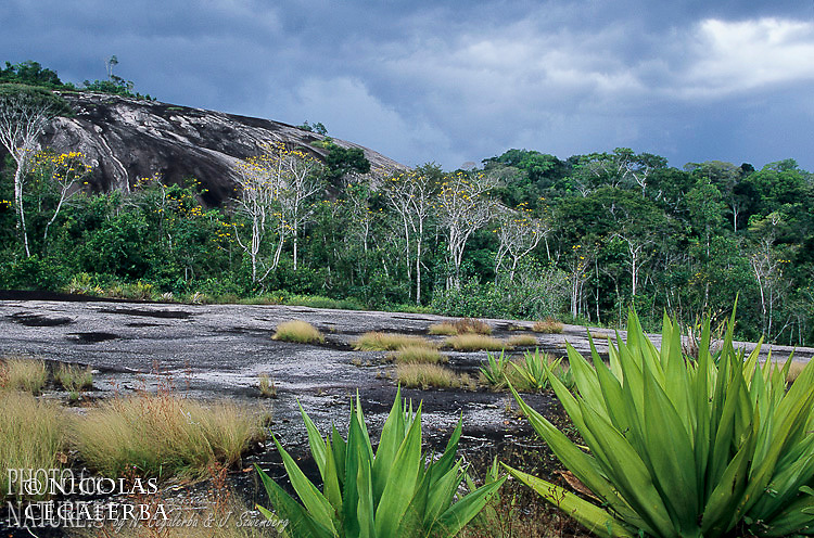 Inselberg en Guyane Française