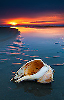a lightning whelk shell sits at the edge of a receding tidal pool as the sun begins to rise through stormy skys over the Atlantic Ocean.