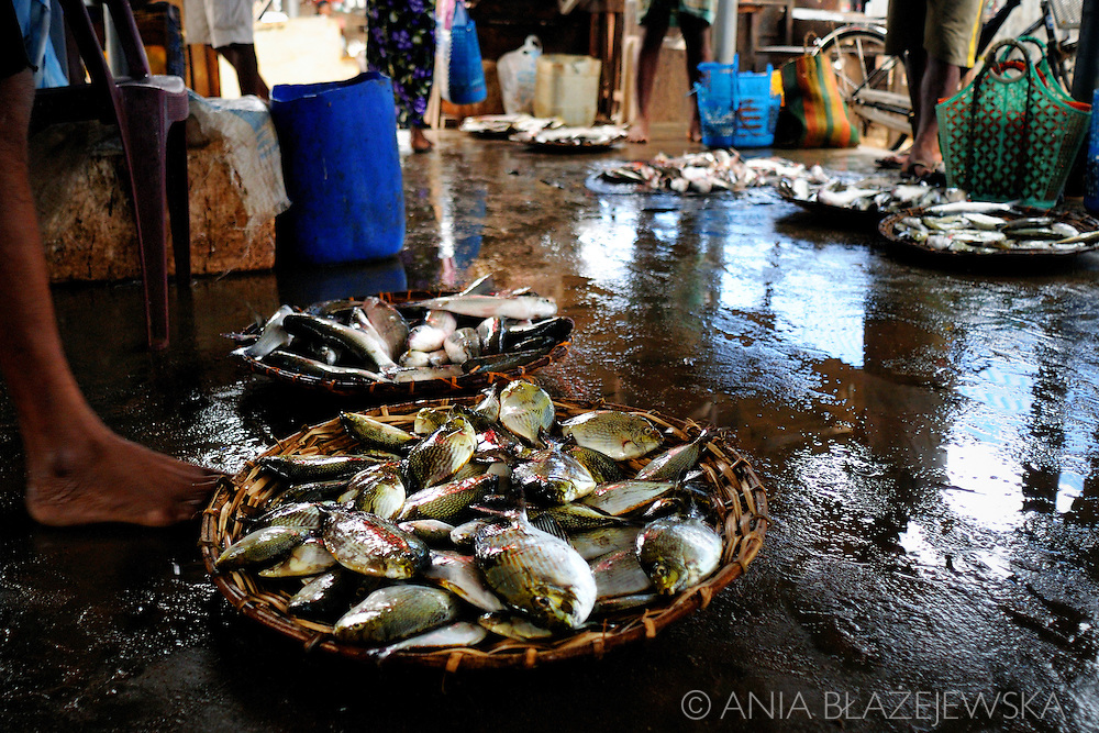 Sri Lanka, Negombo. Baskets full of fish in the fish market.