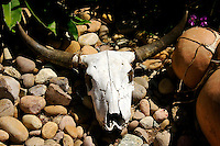 A cow skull lays on the bed of river stones.