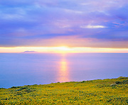 0603-1017B  ~  Copyright:  George H. H. Huey ~  Goldfields [Lasthernia californica] blooming at Arch Point at sunrise, with Catalina Island on horizon.  Santa Barbara Island.  Channel Islands National Park, California.
