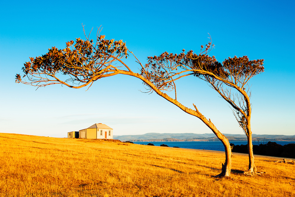 Wind blown Moreton Bay figs frame the heritage listed Ruby Hunts Cottage at Maria Island National Park.