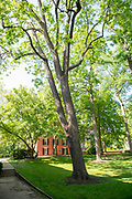 college green, Mapp Athens, summer, Tree Tour, Black Walnut