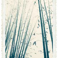 Bamboo in Sapa. North Vietnam.