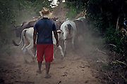 Huicho Luis Angel taking his cows home at dusk.