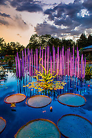 """Monet Pool Fiori"", Monet Pool, Dale Chihuly Exhibition (blown glass), Denver Botanic Gardens, Denver, Colorado USA."