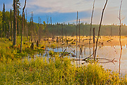 Wetland at sunrise on Kendall Inlet of Lake of The Woods<br /> <br /> Ontario<br /> Canada