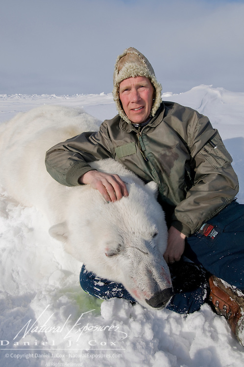 Dr. Steven Amstrup with a polar bear (Ursus maritimes) on the Beaufort Sea, Alaska.