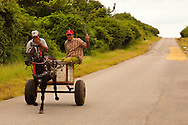 Men on horse drawn cart pssing rice drying on the road. Playa La Mulata, Pinar del Rio, Cuba.