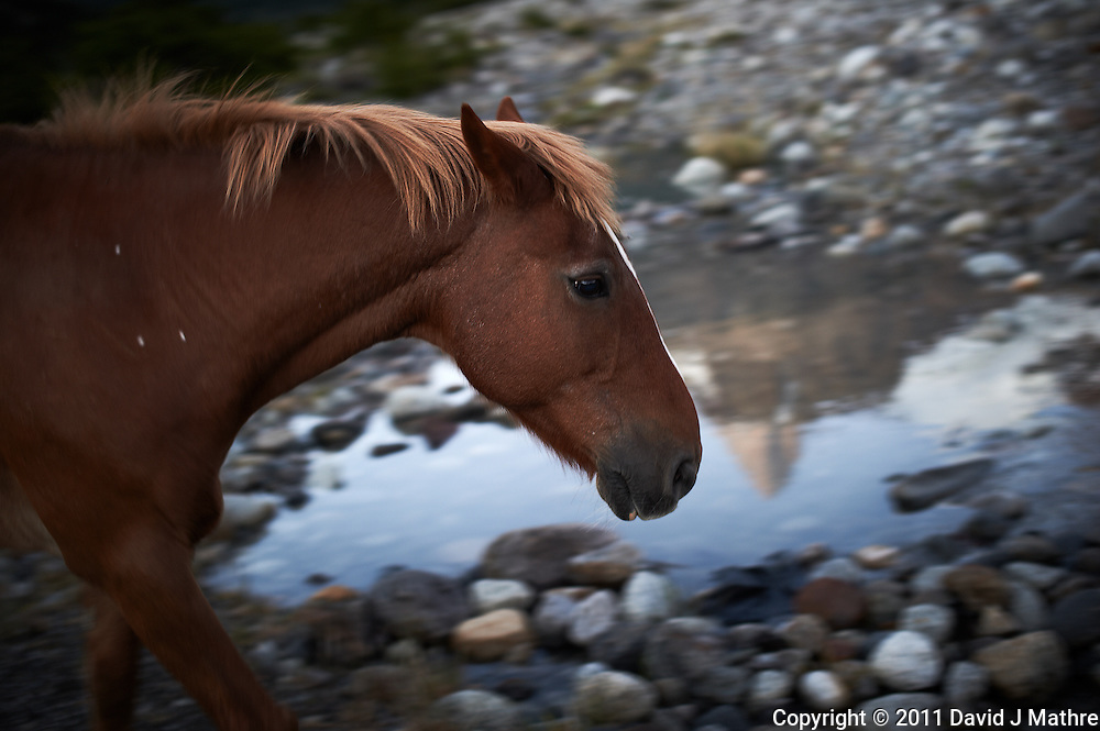 Reflection of Fitzroy in the Morning with a Horse. Hosteria El Pilar in El Chalten, Argentina. Image taken with a Nikon D3s and 50 mm f/1.4G lens (ISO 400, 50 mm, f/2.8, 1/25 sec). Patagonia workshop with Thom Hogan, Day 7.