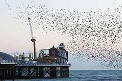 © Licensed to London News Pictures. 02/02/2016. Brighton, UK. Thousands of starlings murmuring above Brighton Sea. Today February 2nd 2016. Photo credit: Hugo Michiels/LNP